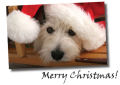 Christmas cards for dog lovers